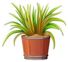 växt i trä kruka