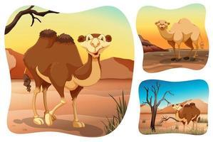 Kamele in den trockenen Wüstenszenen vektor