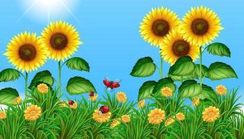 Sonnenblumenfeld mit dem Marienkäferfliegen vektor