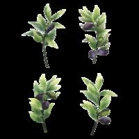 Olivenblatt im Aquarell-Stil gesetzt vektor