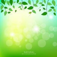 Naturlig bakgrund med gröna bladbakgrund