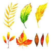 Herbstlaub-Sammlung