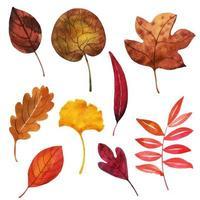 Herbstlaub-Auflistung