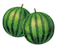 Aquarell Wassermelonen vektor