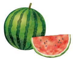 Vattenfärgvattenmeloner som isoleras på en vit bakgrund.