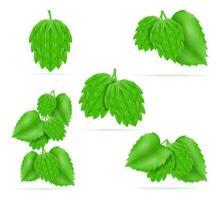 humle mogen och grön öl beredning ingrediens vektorillustration