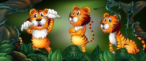 Tre tigrar i regnskogen vektor