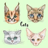Ansikten på katter av olika raser. Uppsättning. Vattenfärg