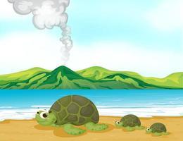 En vulkanstrand och sköldpaddor vektor