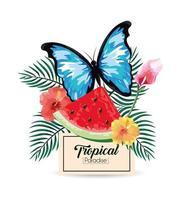 Etikett mit tropischer Wassermelone und Schmetterling mit Pflanzen vektor