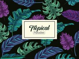 tropische Blätter Pflanzen und exotische Label vektor