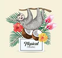Faultier mit tropischer Kokosnuss vektor