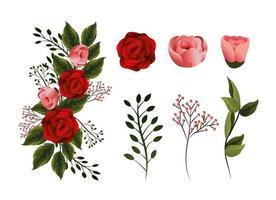 Set Schönheit Blumen Pflanzen mit Blütenblättern und Blättern vektor