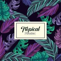 tropiska exotiska blad bakgrund
