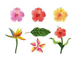 Set tropische Blumen Pflanzen und exotische Blätter vektor