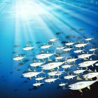 Unterwasserszene mit Thunfischschwarm