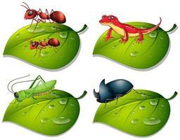 fyra typer av insekter på gröna blad