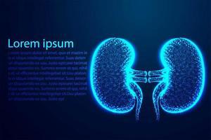 menschliche Anatomiepunkte der Nieren verbinden das Netzwerk