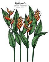 Heliconia Blumen- und Blattzeichnung vektor