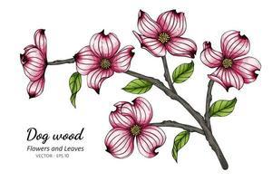 rosa Hartriegelblume und Blattzeichnung vektor