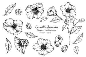 Sammlung von Blüten und Blättern der Kamelie japonica vektor