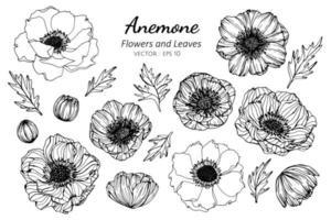 samling av anemonblommor och blad