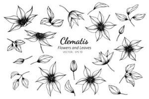 samling clematis blomma och blad