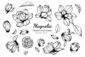 samling av magnoliablommor och blad