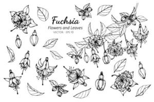 samling av fuchsia blommor och blad