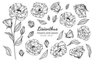 samling av lisianthusblomma och blad