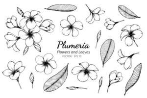 Sammlung von Plumeria Blüten und Blättern