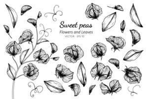 samling av söta ärtblommor och blad