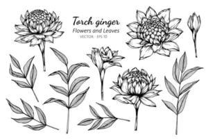 Sammlung von Fackel Ingwer Blüten und Blätter vektor