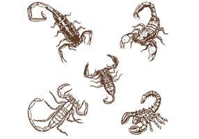 Handdragen Scorpionsvektorer