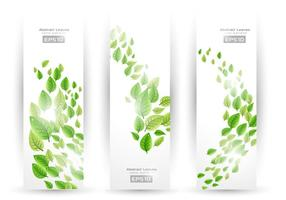 Swirling Leaf Banners Vector Pack