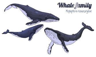 Familie von Walen mit Kalb vektor