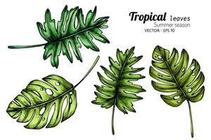 uppsättning av stora tropiska blad
