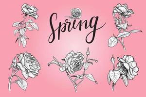 Satz von Rosenblüten-Skteches auf Rosa