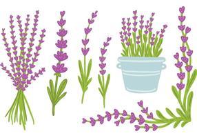 Freie Hand gezeichneten Lavendelvektor