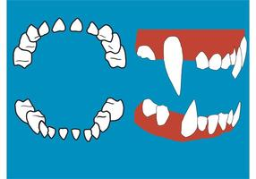 Vektor Zähne und Zahnfleisch