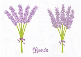 Gratis Vector Lavendelblomma