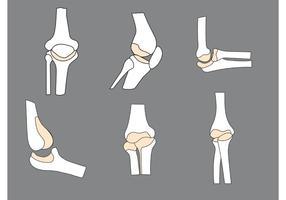 Free Vector Bones