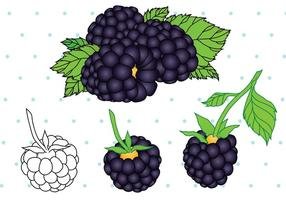 Schwarze Beerenfrucht Vektor
