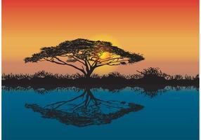 Akazienbaum Afrikanischer Sonnenuntergang Vektor