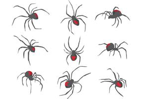 Schwarze Witwen-Spinnenvektoren vektor