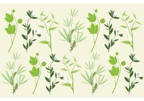 Botanik Växter Vektorer