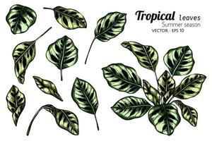 Satz von exotischen tropischen Blättern vektor