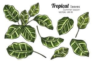 tropiska blad handritad illustration