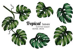 uppsättning av tropisk bladritning av monstera