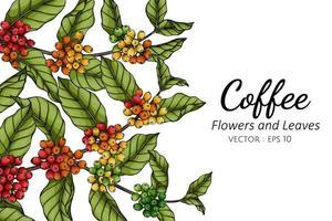 Kaffeeblume und Blattzeichnung vektor